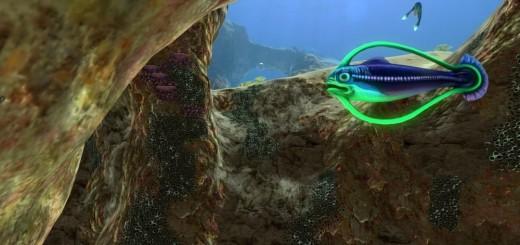 Рыба обруч Hoopfish